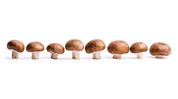 Mushrooms are not a part of the nightshade family