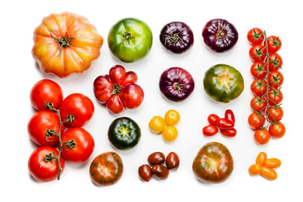 Tomatoes come in a rainbow of colors: red, sure, but also shades of yellow, orange, pink, green, burgundy, purple, streaked and striped, and practically black.