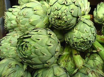Did you know that there are actually about 140 different artichoke varieties in existence? Of these 140, only about 40 are grown commercially to be sold as food.